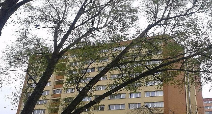 Bezpieczeństwo, pochyłe drzewo…… - zdjęcie, fotografia