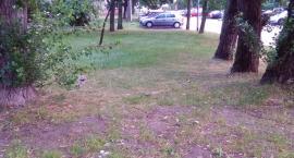 Nowe miejsca postojowe przy ul. Racławickiej 152 (nr 2471)