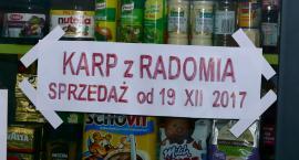 Karp z Radomia